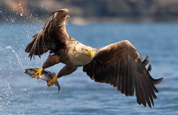 hunter-eagle
